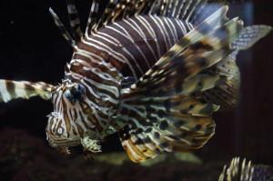 Grenå akvarium
